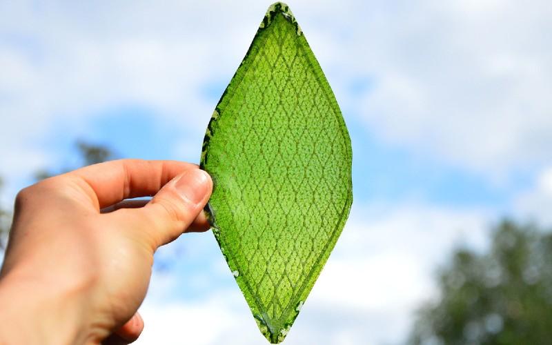 Arborea BioSolar Leaf